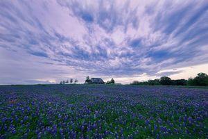 Бесплатные фото закат, поле, цветы, люпин, домик, пейзаж