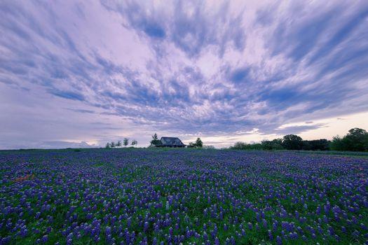 Фото бесплатно люпин, дом, пейзаж