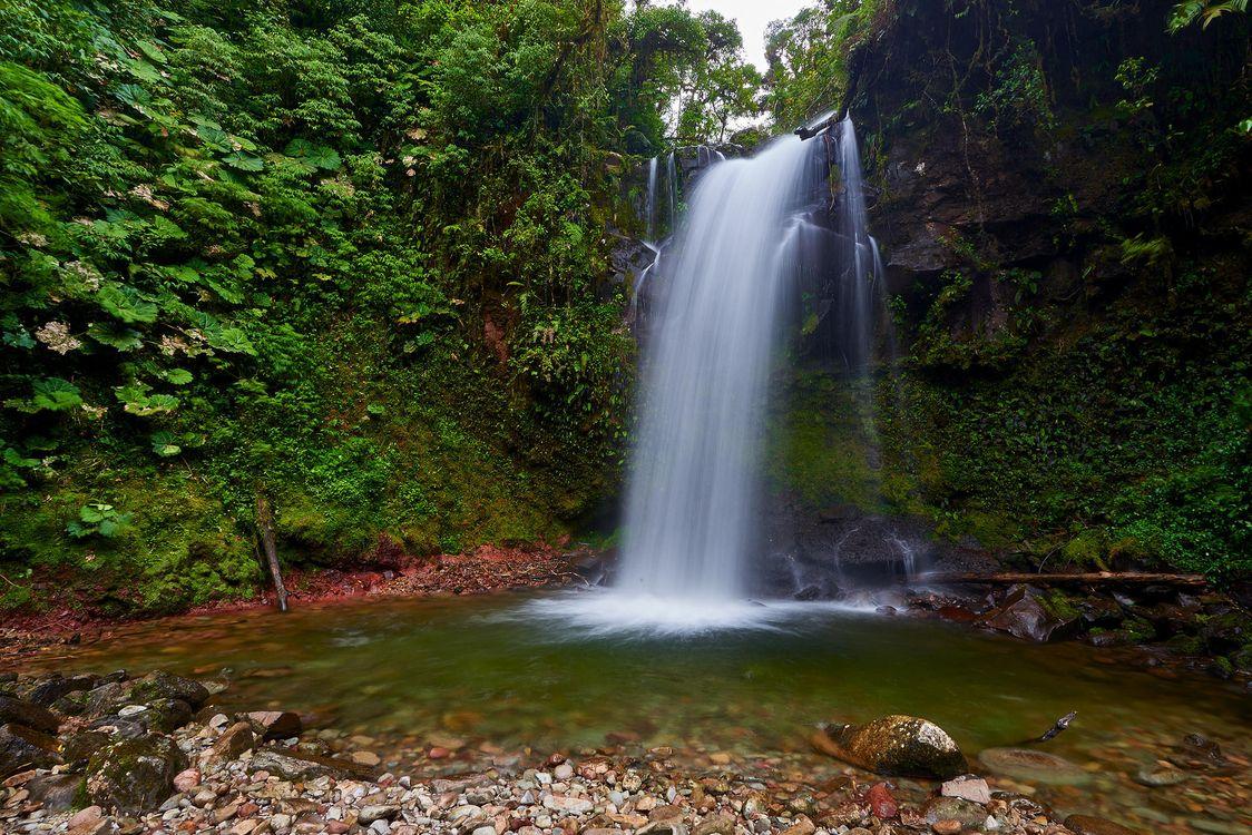 Обои водопад, лес, деревья, скалы, природа на телефон | картинки природа