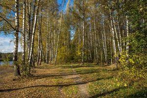 Бесплатные фото Архангельское, Красногорский район, Московская область, Россия, осень, река, деревья