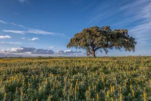 Бесплатные фото поле, цветы, дерево, пейзаж