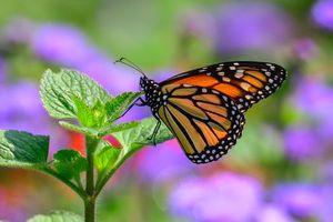 Фото бесплатно цветок, бабочка, насекомое
