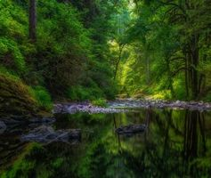 Красивые фотографии на тему водоём, деревья