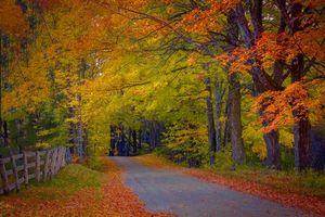 Заставки осень, дорога, лес, деревья, забор, пейзаж