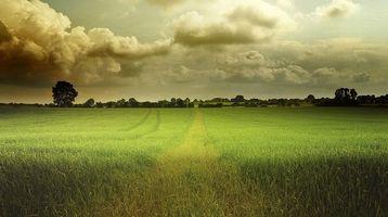 Бесплатные фото закат, поле, трава, деревья, пейзаж