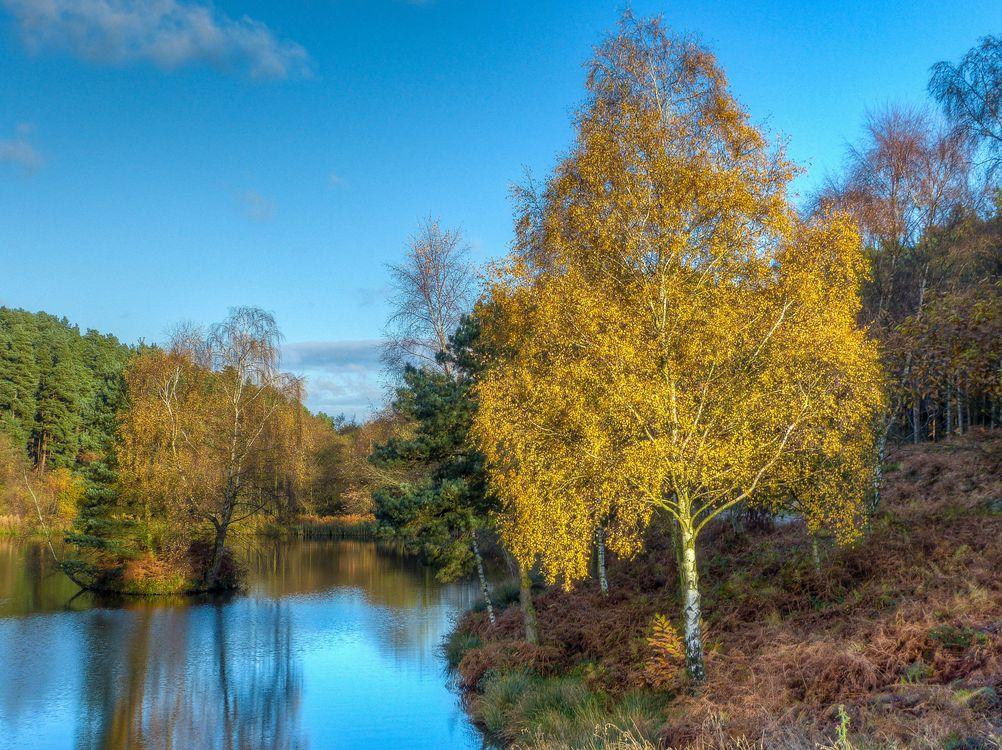 Бесплатно лес, озеро на телефон фото