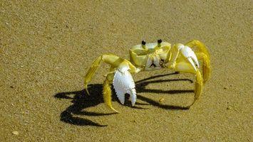 Фото бесплатно Прайя-да-Лагоинья, Параипаба, Сеара, Бразилия, берег, песок, краб