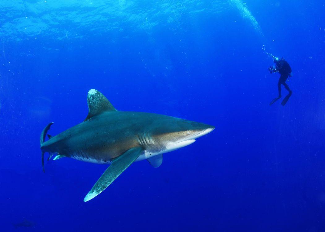Фото бесплатно Морские обитатели, Акулы, Акула, море, Подводный мир - на рабочий стол