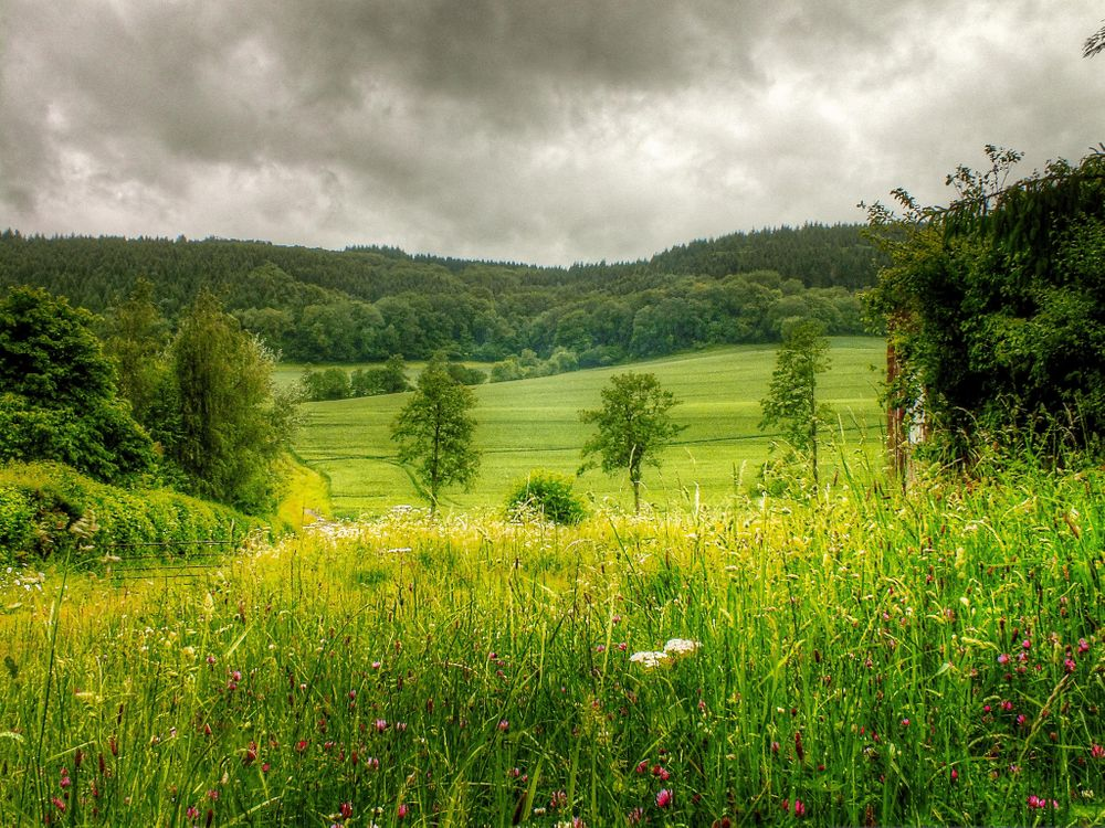 Фото бесплатно поле, холмы, цветы, деревья, пейзаж, пейзажи