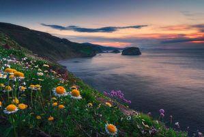 Бесплатные фото Провинция Бискайя, Испания, Страна Басков, закат, море, берег, цветы