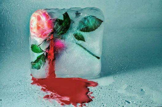 Фото бесплатно лёд, роза, кровь
