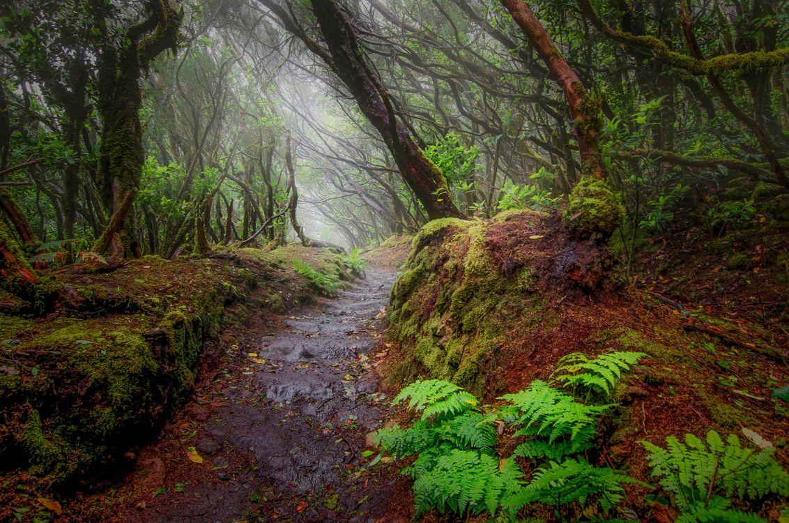 Фото бесплатно Путь, лес, природа - на рабочий стол