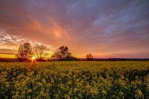 Заставки закат, поле, цветы, деревья, пейзаж