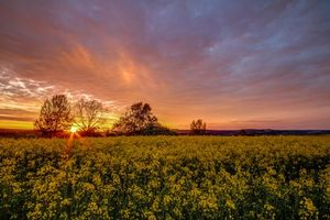 Photo free sunset, field, flowers