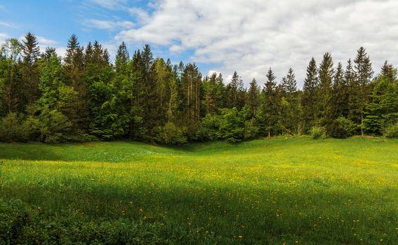 Photo free field, hills, trees