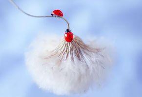 Photo free ladybug, flower, insect