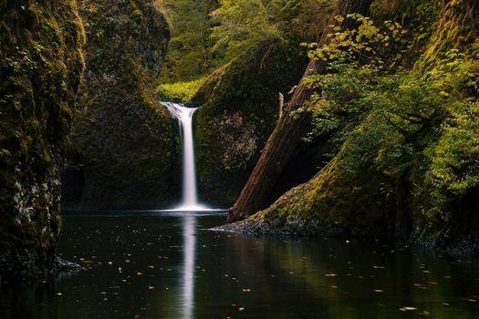 Upper Punchbowl Falls, Columbia RIver Gorge, водопад, лес, деревья