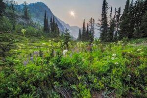 Бесплатные фото закат, поле, горы, цветы, деревья, пейзаж