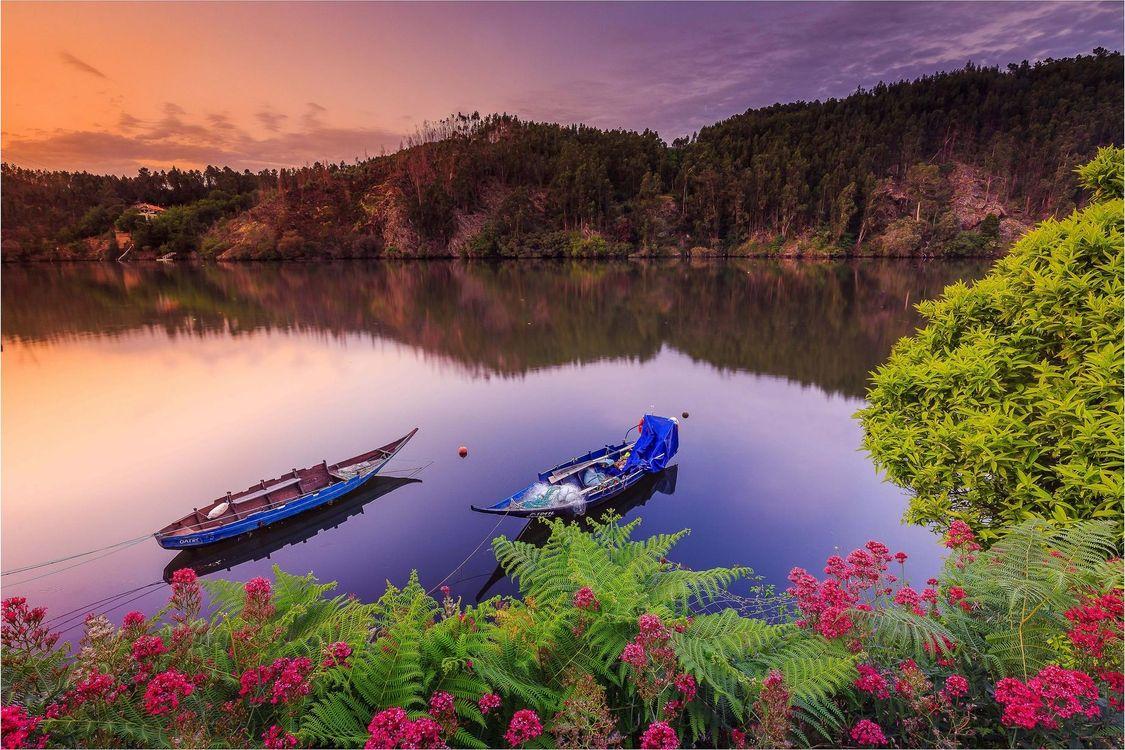 Фото бесплатно Португальский пейзаж, закат, озеро, лодки, деревья, пейзажд, пейзажи