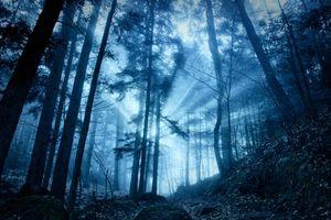 Бесплатные фото лес,деревья,туман,осень,пейзаж