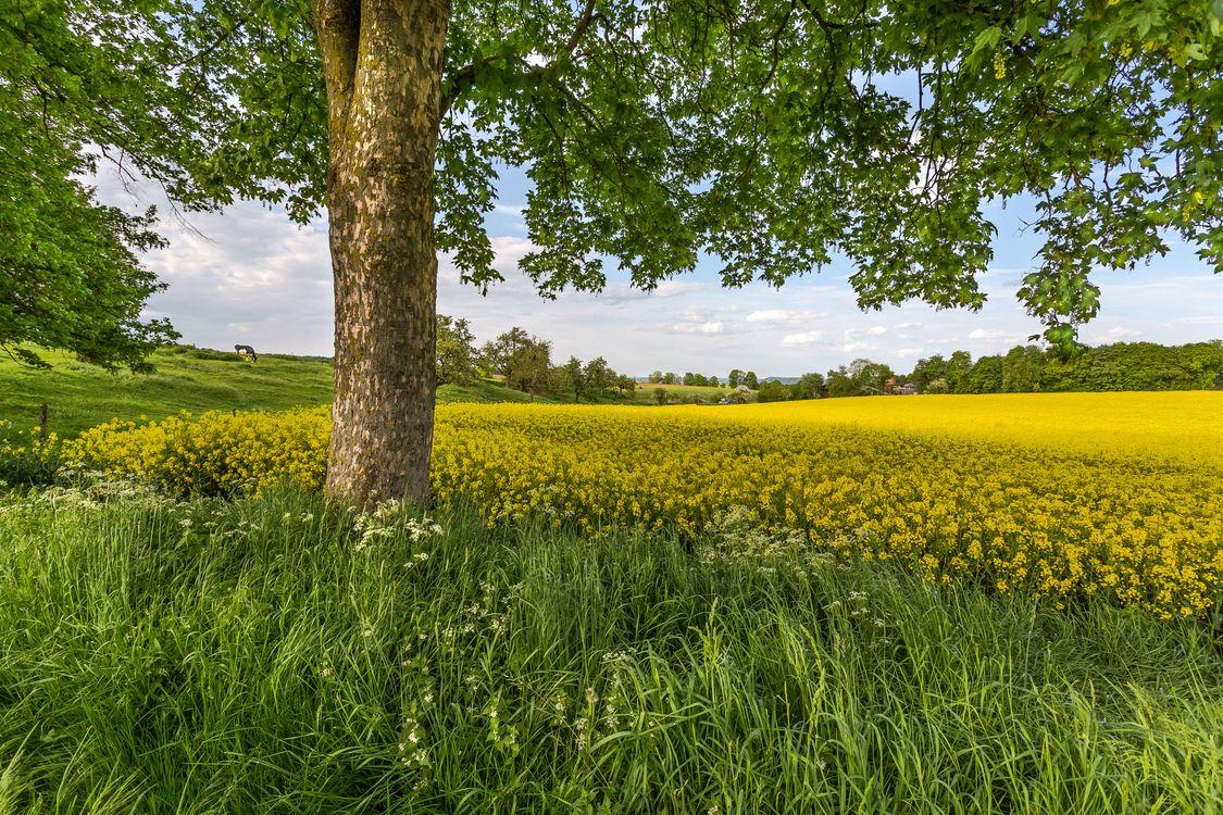 Фото бесплатно поле, трава, холмы, цветы, деревья, пейзаж - на рабочий стол