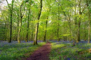 Фото бесплатно путь, пейзаж, природа