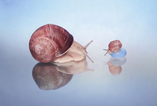 For your snail, gastropod quality wallpaper
