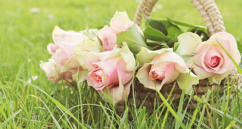 цветы, розовые, зелень бесплатно