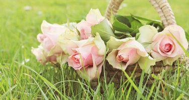 Фото бесплатно корзинка, цветы, розы