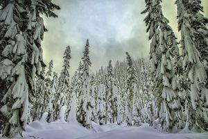Бесплатные фото Лес,зима,деревья,снег,сугробы,пейзаж