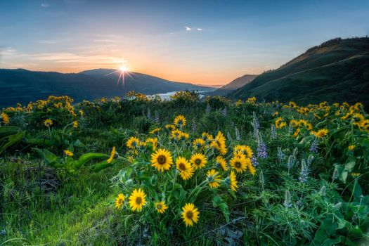 Фото бесплатно берег, ущелье реки Колумбия, цветы