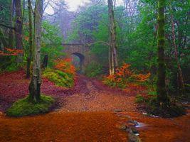 Бесплатные фото осень,лес,парк,речка,деревья,мост,арка