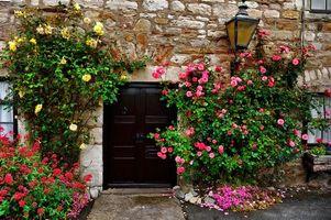 Заставки здание,дом,стена,дверь,окно,фонарь,цветы