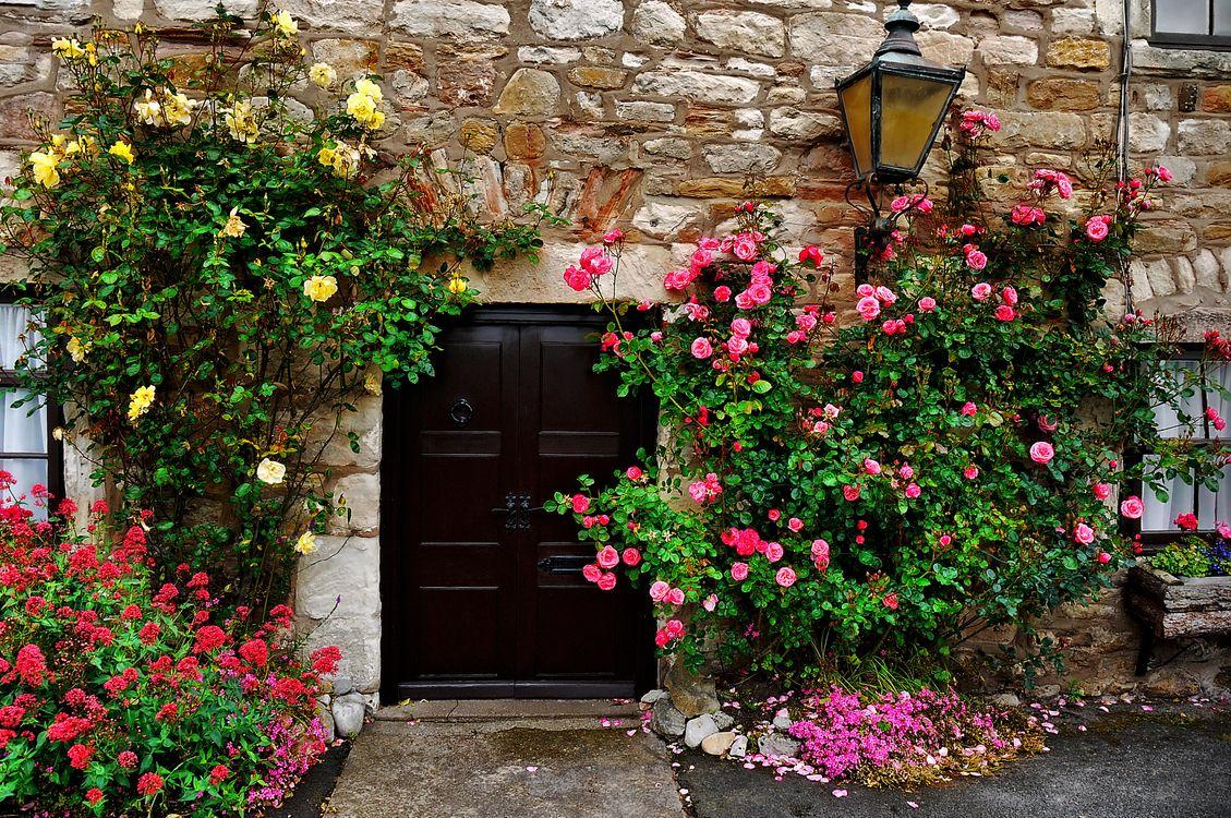 Обои здание, дом, стена, дверь, окно, фонарь, цветы, розы, интерьер на телефон | картинки интерьер - скачать