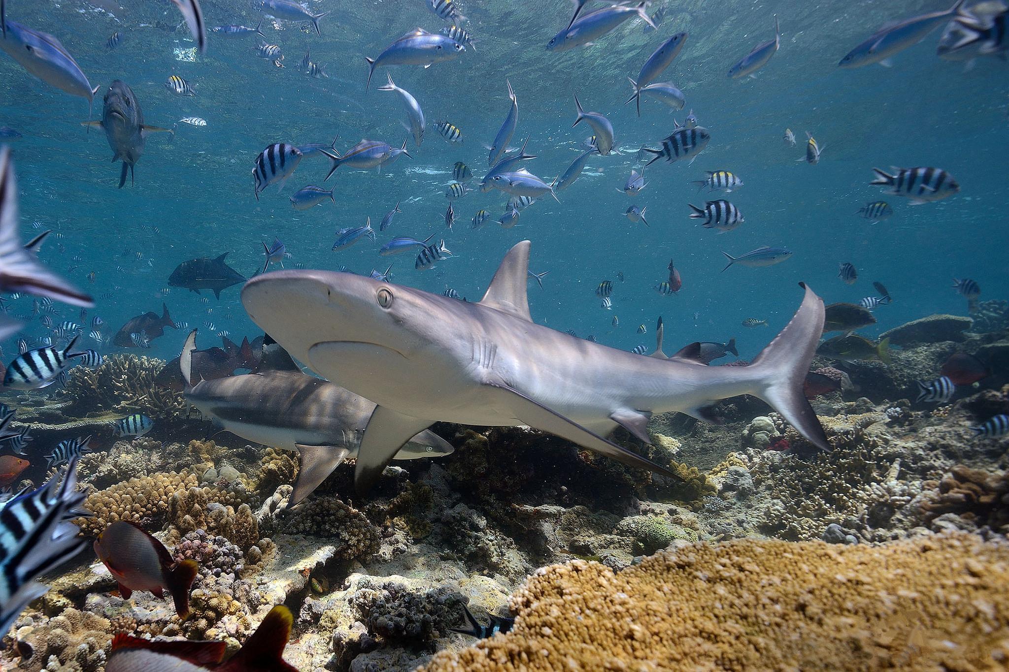 Реальные фото акул в океане