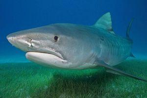 Бесплатные фото Морские обитатели,Акулы,Акула,море,морское дно,вода