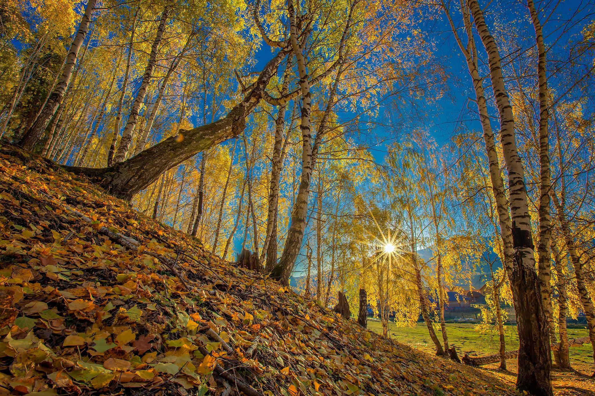 Обои осень, косогор, лес, деревья