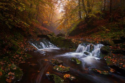 Photo free trees, autumn stream, waterfall