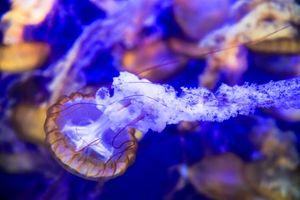 Бесплатные фото море, морское дно, медузы, медуза, природа, подводный мир