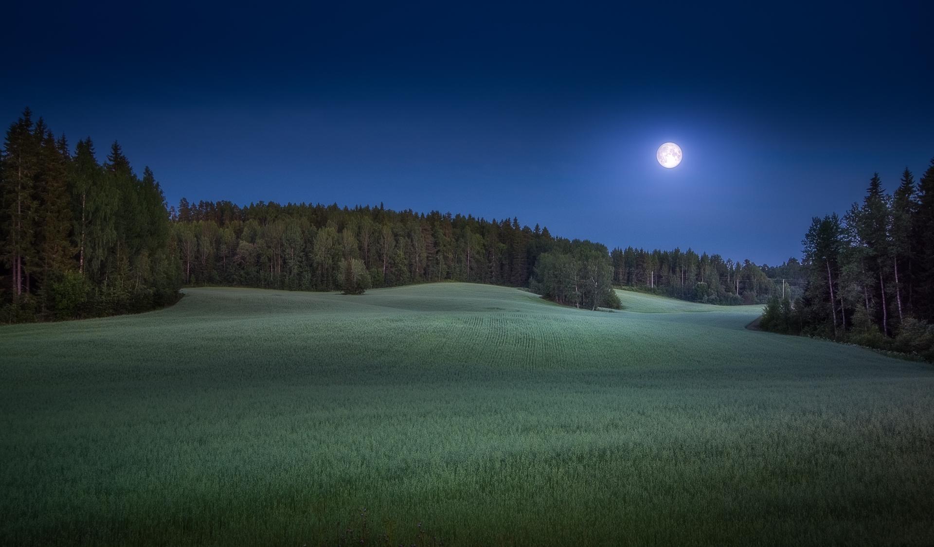 Обои поле, луна, лес, деревья
