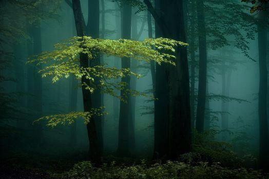 Фото бесплатно осень, природа, ночь