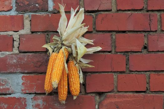 Photo free corn, thanksgiving, flowering plant