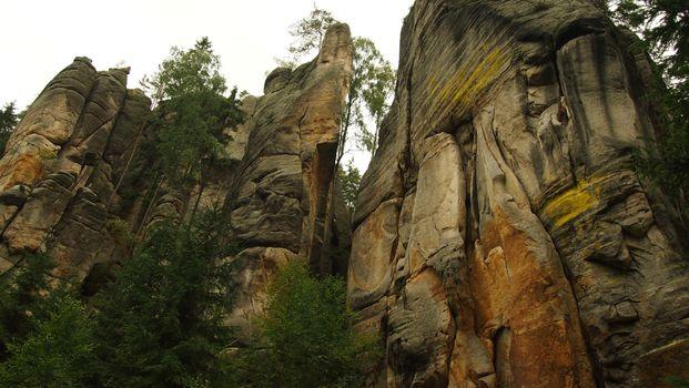 Photo free tree, rock, stone