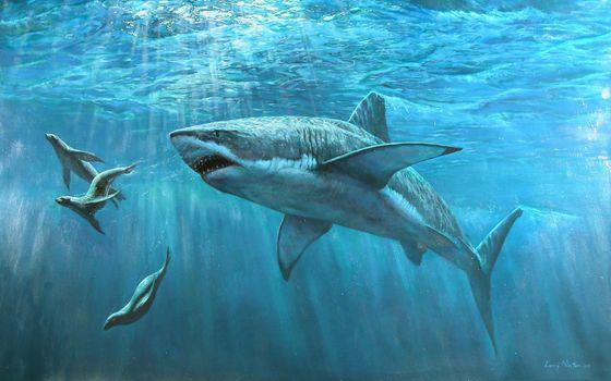 Фото бесплатно тигровая акула, акула, подводный