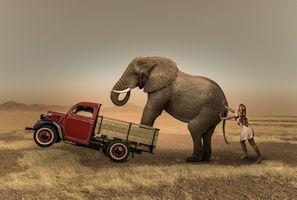 Фото бесплатно автомобиль, слон, девушка