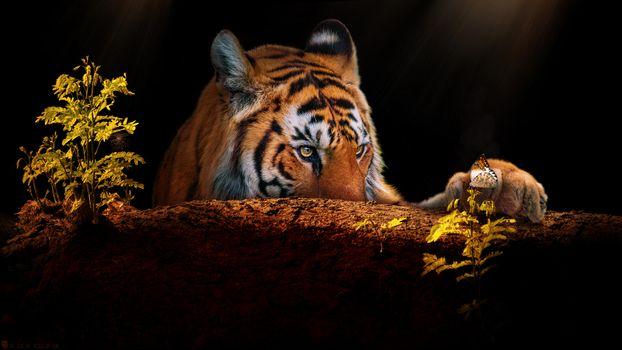 Заставки хищник, бабочка, взгляд
