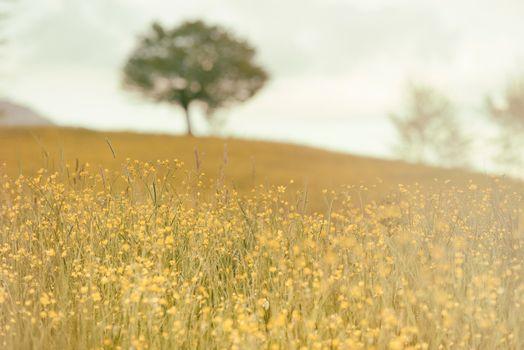 Photo free grassland, wheat, hill