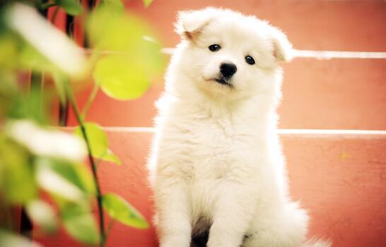 Photo free white, sweet, puppy