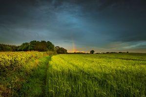 Бесплатные фото закат,поле,деревья,колосья,пейзаж