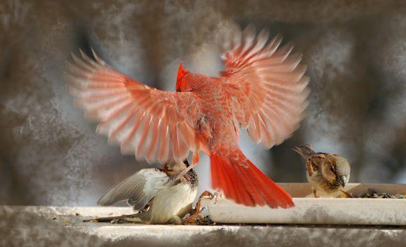 Photo free birds, wildlife, beak